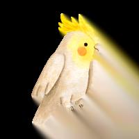 Flocky | Fodere per gabbie uccelli